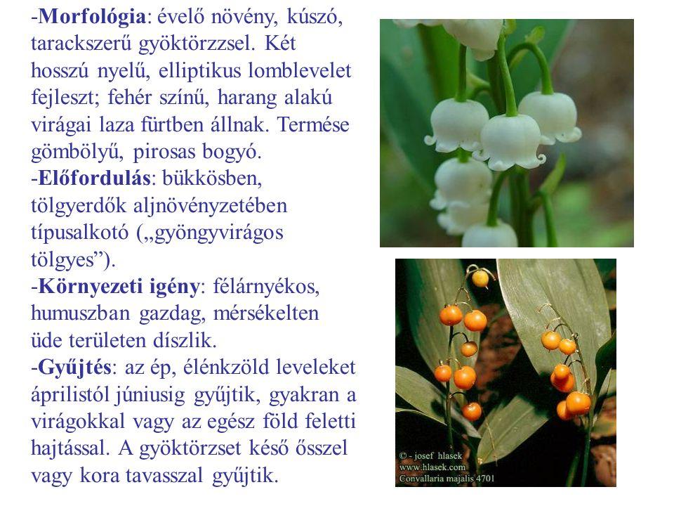 -Morfológia: évelő növény, kúszó, tarackszerű gyöktörzzsel. Két hosszú nyelű, elliptikus lomblevelet fejleszt; fehér színű, harang alakú virágai laza