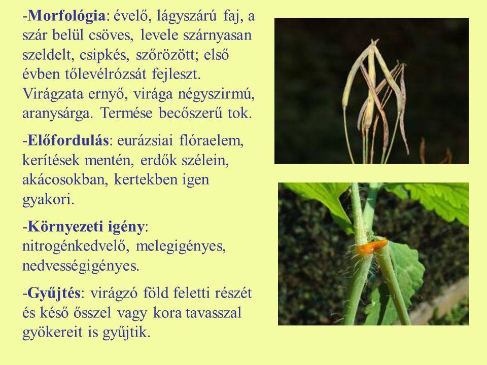 -Morfológia: évelő, lágyszárú faj, a szár belül csöves, levele szárnyasan szeldelt, csipkés, szőrözött; első évben tőlevélrózsát fejleszt. Virágzata e