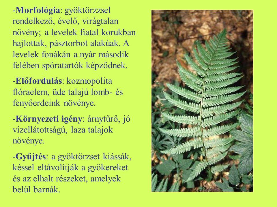 -Morfológia: gyöktörzzsel rendelkező, évelő, virágtalan növény; a levelek fiatal korukban hajlottak, pásztorbot alakúak. A levelek fonákán a nyár máso