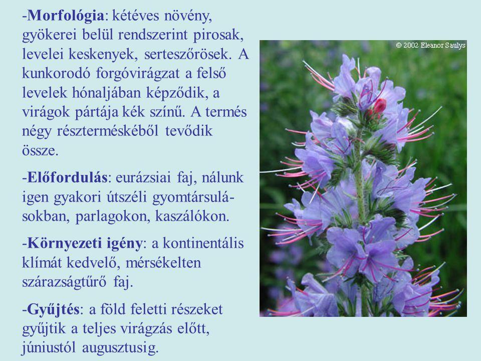 -Morfológia: kétéves növény, gyökerei belül rendszerint pirosak, levelei keskenyek, serteszőrösek. A kunkorodó forgóvirágzat a felső levelek hónaljába