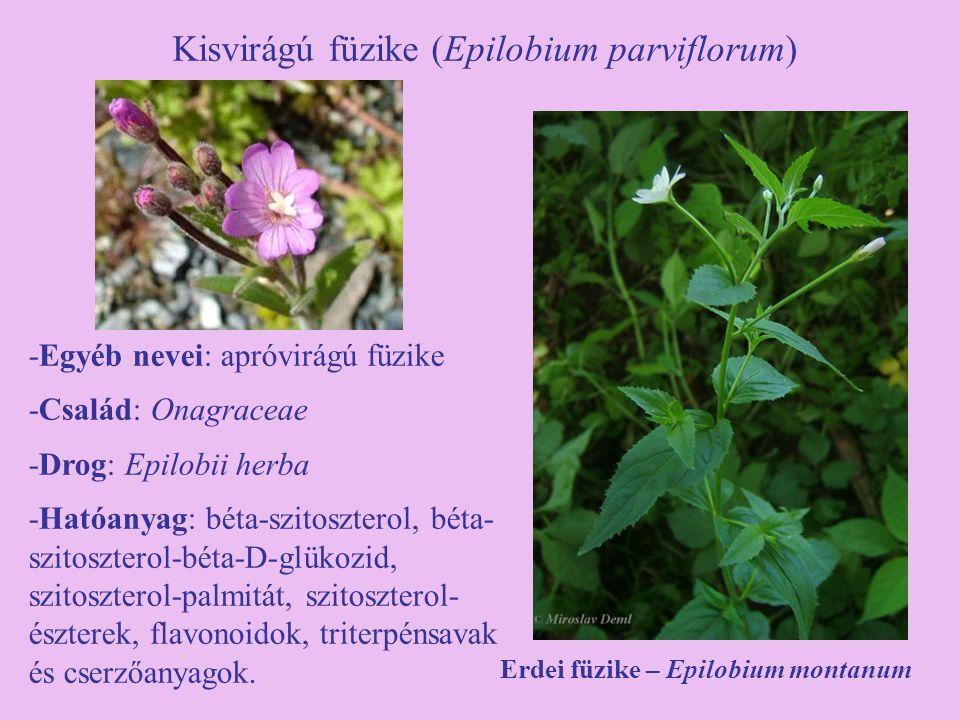 Kisvirágú füzike (Epilobium parviflorum) -Egyéb nevei: apróvirágú füzike -Család: Onagraceae -Drog: Epilobii herba -Hatóanyag: béta-szitoszterol, béta