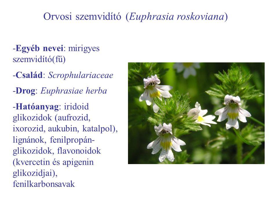 Orvosi szemvidító (Euphrasia roskoviana) -Egyéb nevei: mirigyes szemvidító(fű) -Család: Scrophulariaceae -Drog: Euphrasiae herba -Hatóanyag: iridoid g