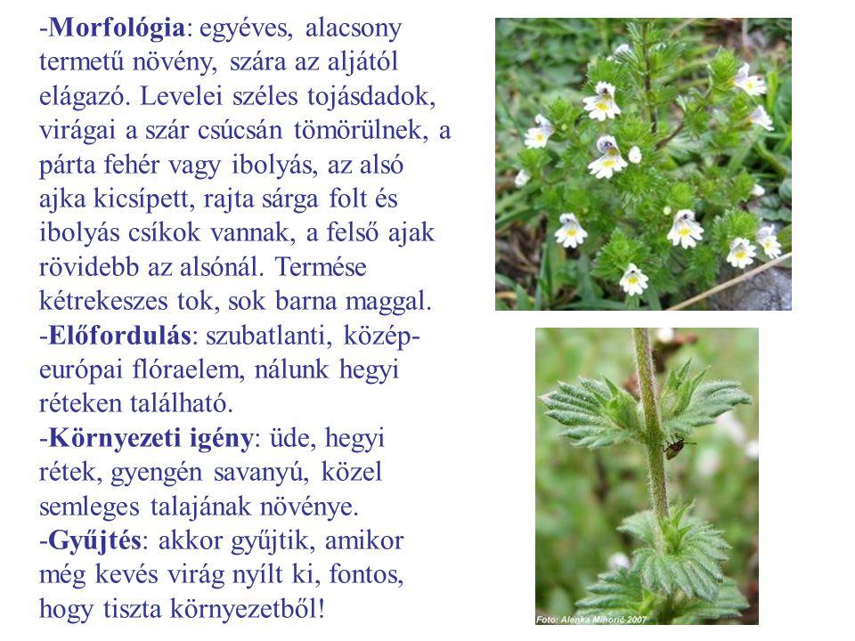 -Morfológia: egyéves, alacsony termetű növény, szára az aljától elágazó. Levelei széles tojásdadok, virágai a szár csúcsán tömörülnek, a párta fehér v
