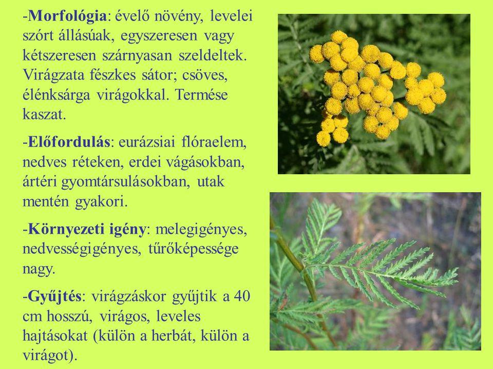 -Morfológia: évelő növény, levelei szórt állásúak, egyszeresen vagy kétszeresen szárnyasan szeldeltek. Virágzata fészkes sátor; csöves, élénksárga vir
