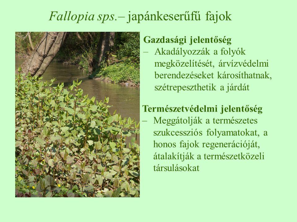 Gazdasági jelentőség –Akadályozzák a folyók megközelítését, árvízvédelmi berendezéseket károsíthatnak, szétrepeszthetik a járdát Fallopia sps.– japánkeserűfű fajok Természetvédelmi jelentőség –Meggátolják a természetes szukcessziós folyamatokat, a honos fajok regenerációját, átalakítják a természetközeli társulásokat