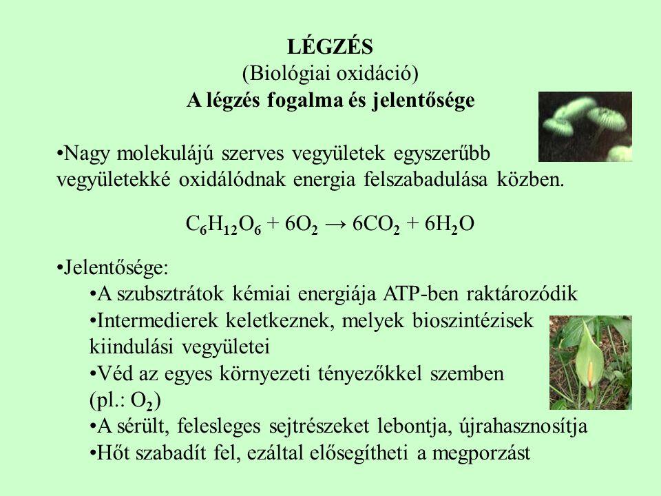 LÉGZÉS (Biológiai oxidáció) A légzés fogalma és jelentősége Nagy molekulájú szerves vegyületek egyszerűbb vegyületekké oxidálódnak energia felszabadul