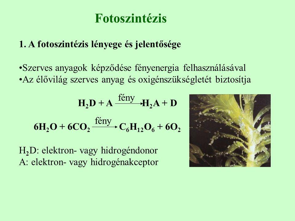 1. A fotoszintézis lényege és jelentősége Szerves anyagok képződése fényenergia felhasználásával Az élővilág szerves anyag és oxigénszükségletét bizto