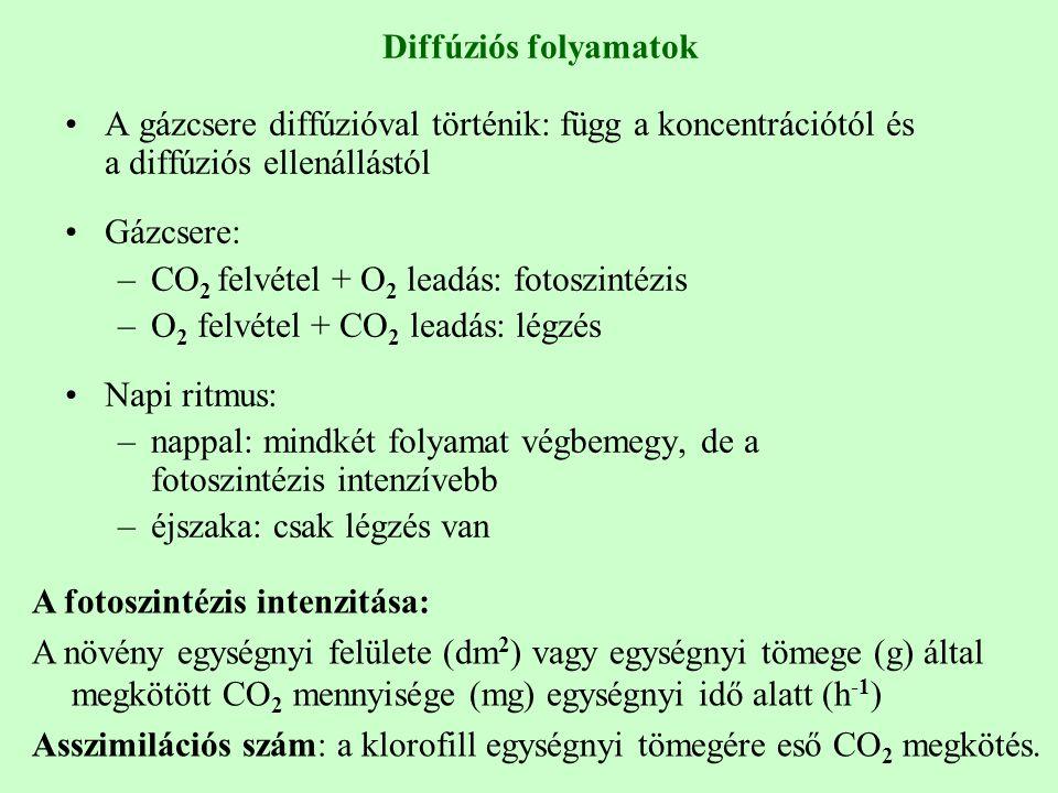 Diffúziós folyamatok A gázcsere diffúzióval történik: függ a koncentrációtól és a diffúziós ellenállástól Gázcsere: –CO 2 felvétel + O 2 leadás: fotos