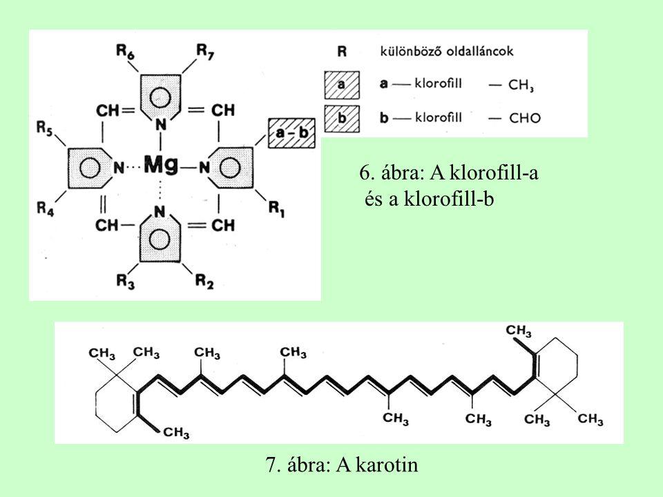 6. ábra: A klorofill-a és a klorofill-b 7. ábra: A karotin