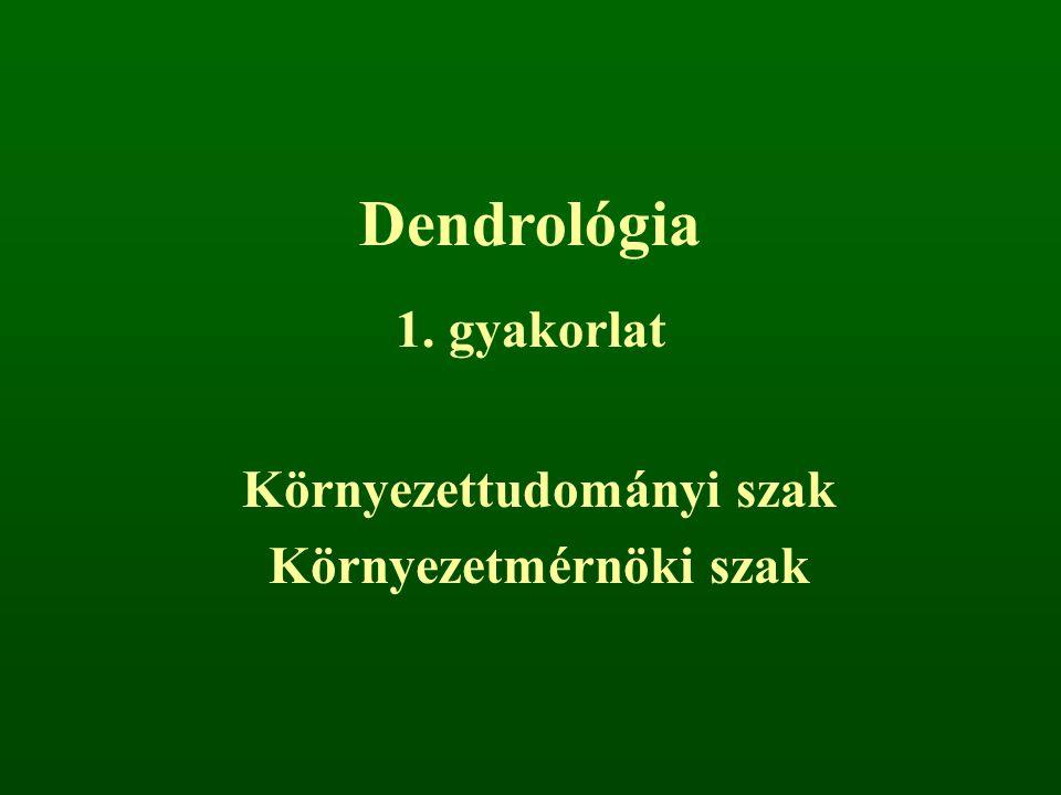Dendrológia 1. gyakorlat Környezettudományi szak Környezetmérnöki szak