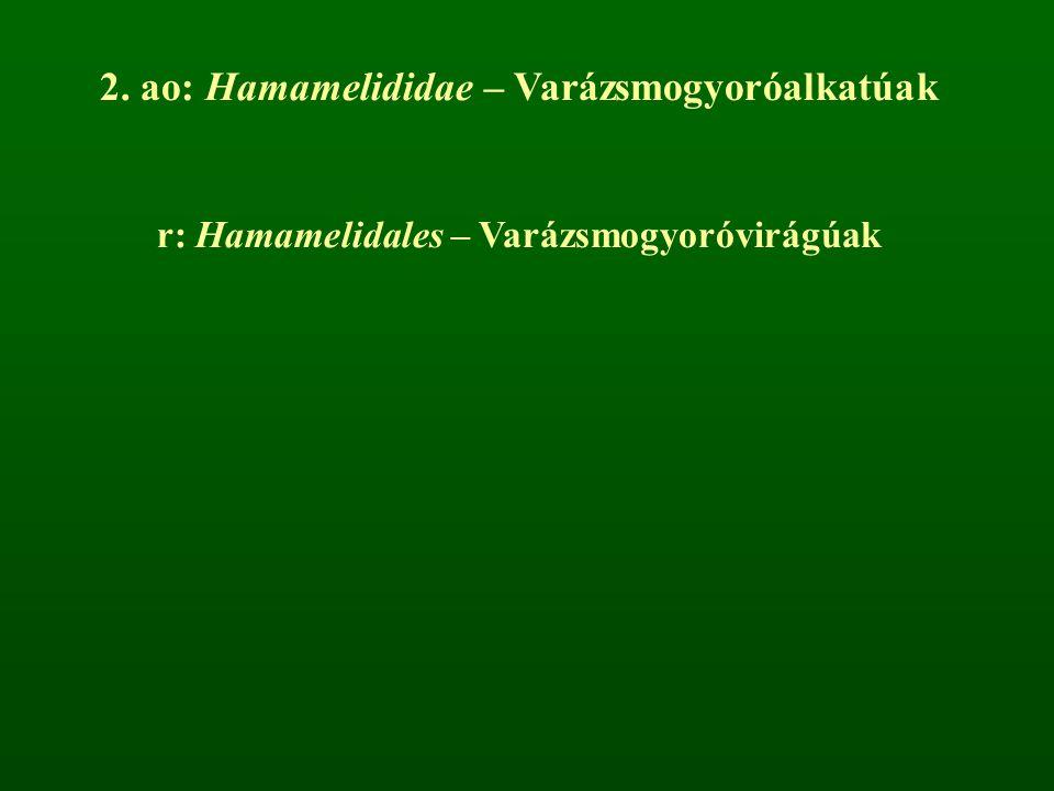 2. ao: Hamamelididae – Varázsmogyoróalkatúak r: Hamamelidales – Varázsmogyoróvirágúak