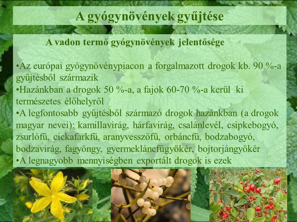 A gyógynövények gyűjtése A vadon termő gyógynövények jelentősége Az európai gyógynövénypiacon a forgalmazott drogok kb. 90 %-a gyűjtésből származik Ha