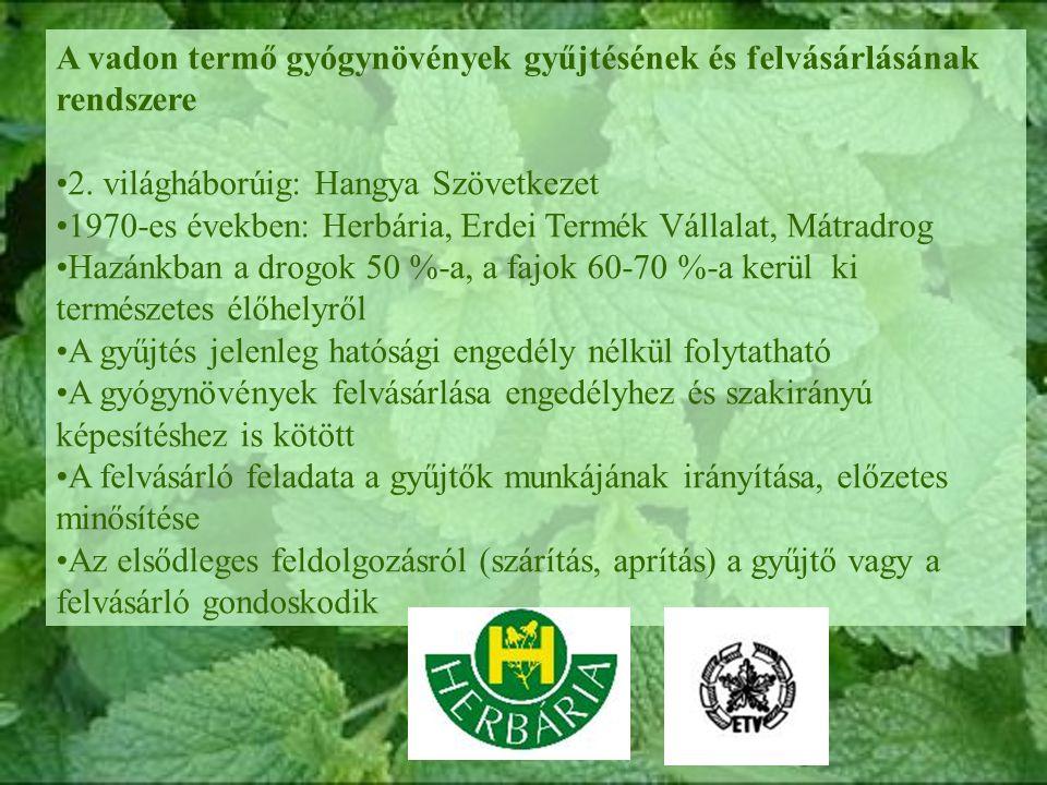 A vadon termő gyógynövények gyűjtésének és felvásárlásának rendszere 2.