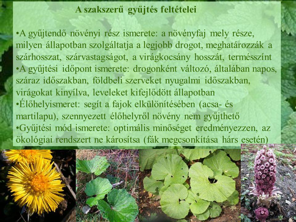 A szakszerű gyűjtés feltételei A gyűjtendő növényi rész ismerete: a növényfaj mely része, milyen állapotban szolgáltatja a legjobb drogot, meghatározzák a szárhosszat, szárvastagságot, a virágkocsány hosszát, termésszínt A gyűjtési időpont ismerete: drogonként változó, általában napos, száraz időszakban, földbeli szerveket nyugalmi időszakban, virágokat kinyílva, leveleket kifejlődött állapotban Élőhelyismeret: segít a fajok elkülönítésében (acsa- és martilapu), szennyezett élőhelyről növény nem gyűjthető Gyűjtési mód ismerete: optimális minőséget eredményezzen, az ökológiai rendszert ne károsítsa (fák megcsonkítása hárs esetén)