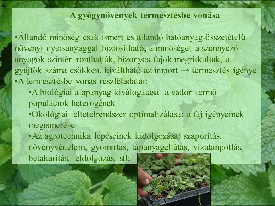 A gyógynövények termesztésbe vonása Állandó minőség csak ismert és állandó hatóanyag-összetételű növényi nyersanyaggal biztosítható, a minőséget a szennyező anyagok szintén ronthatják, bizonyos fajok megritkultak, a gyűjtők száma csökken, kiváltható az import → termesztés igénye A termesztésbe vonás részfeladatai: A biológiai alapanyag kiválogatása: a vadon termő populációk heterogének Ökológiai feltételrendszer optimalizálása: a faj igényeinek megismerése Az agrotechnika lépéseinek kidolgozása: szaporítás, növényvédelem, gyomirtás, tápanyagellátás, vízutánpótlás, betakarítás, feldolgozás, stb.