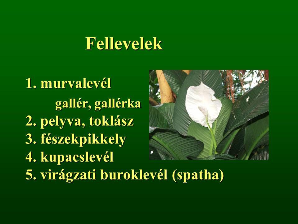 Fellevelek 1. murvalevél gallér, gallérka 2. pelyva, toklász 3. fészekpikkely 4. kupacslevél 5. virágzati buroklevél (spatha)