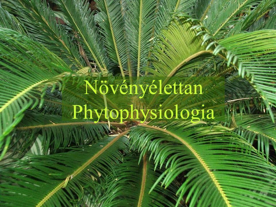 A növényélettan tárgya és jelentősége Tárgya: Az egyes életfolyamatok vizsgálata (fotoszintézis, vízgazdálkodás, növekedés, fejlődés, szaporodás, mozgás, légzés, ingerlékenység, változékonyság, átörökítés) Az életfolyamatok közötti összefüggések vizsgálata A növény és a környezet kapcsolatának vizsgálata Részterületei: Anyag- és energiacsere élettana Fejlődési folyamatok élettana Ingerélettan Társtudományai: biofizika, biokémia, genetika, ökológia