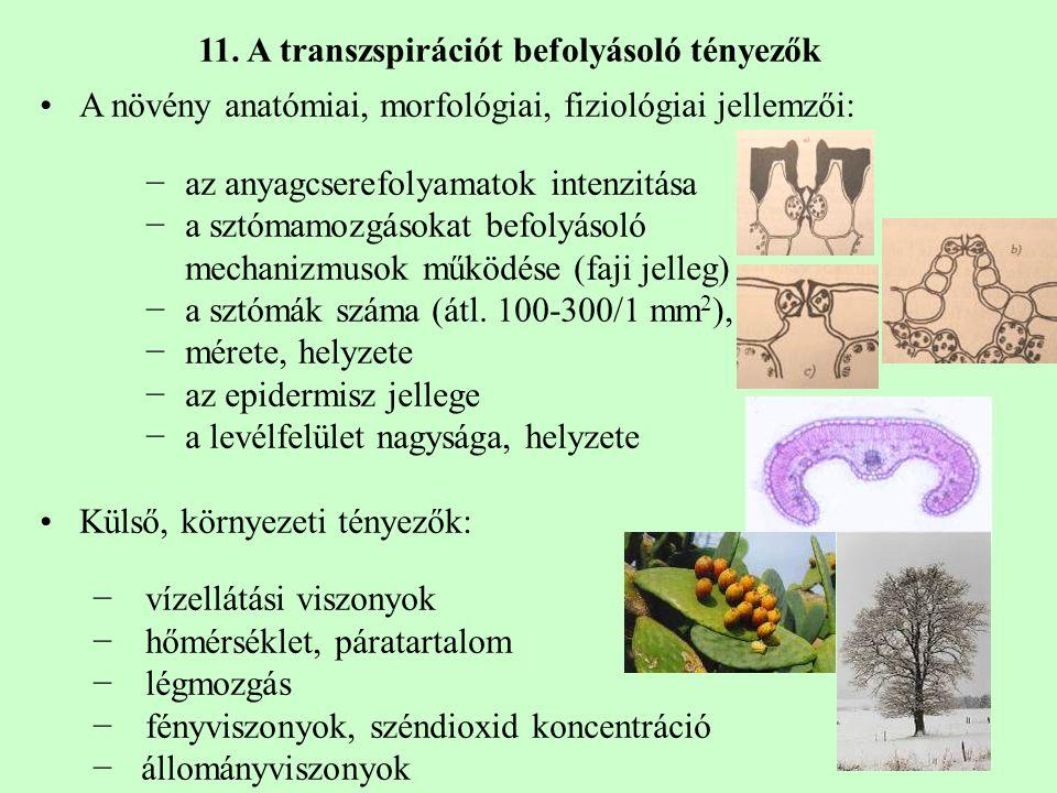 A növény anatómiai, morfológiai, fiziológiai jellemzői: −az anyagcserefolyamatok intenzitása −a sztómamozgásokat befolyásoló mechanizmusok működése (faji jelleg) −a sztómák száma (átl.