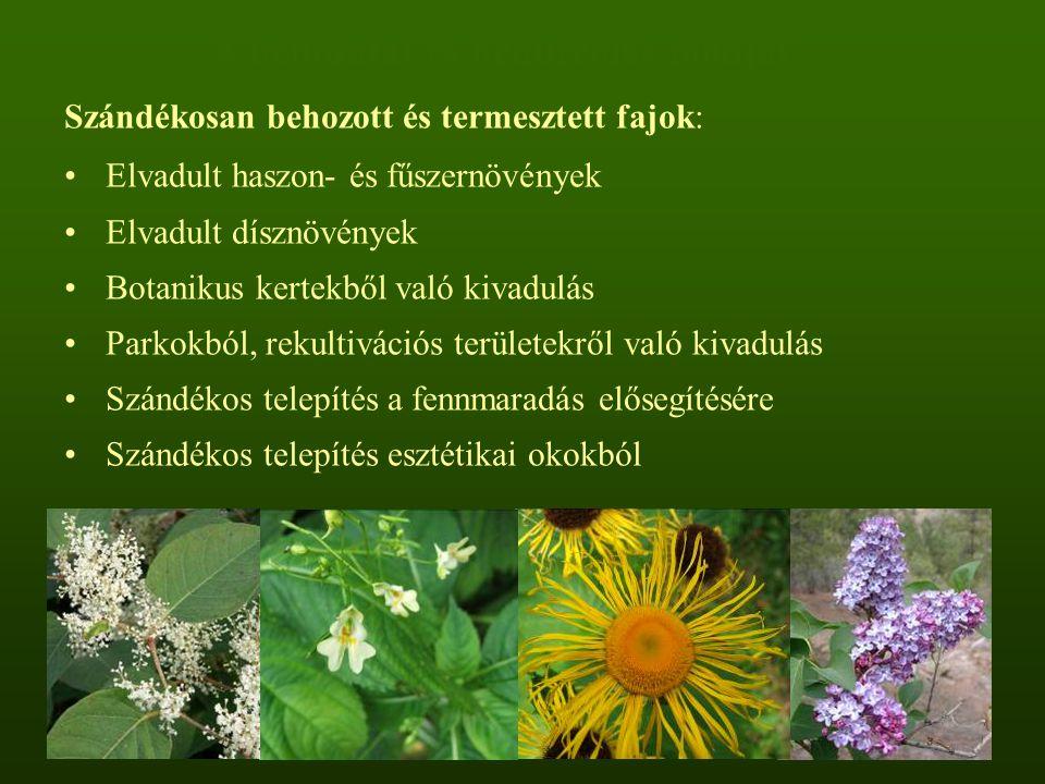 A behozatal és behurcolás módjai Szándékosan behozott és termesztett fajok: Elvadult haszon- és fűszernövények Elvadult dísznövények Botanikus kertekb