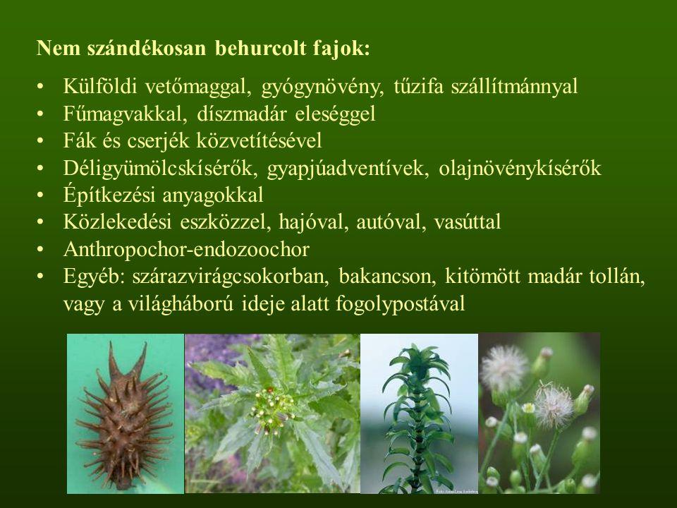 Nem szándékosan behurcolt fajok: Külföldi vetőmaggal, gyógynövény, tűzifa szállítmánnyal Fűmagvakkal, díszmadár eleséggel Fák és cserjék közvetítéséve