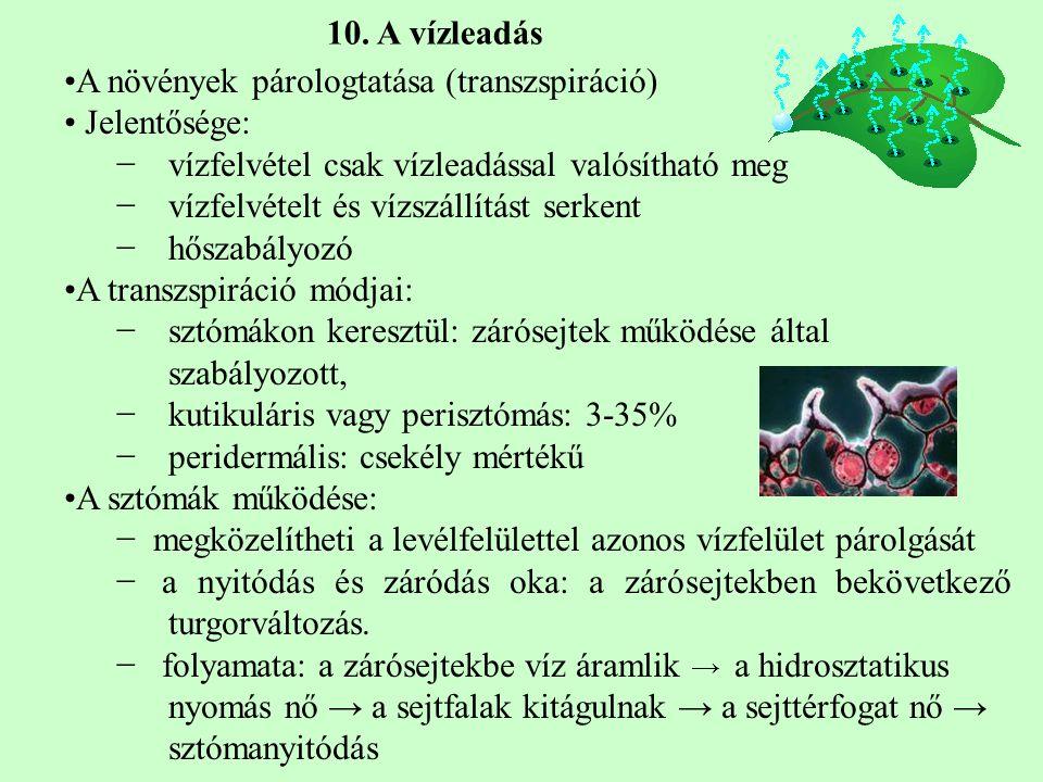A növények párologtatása (transzspiráció) Jelentősége: −vízfelvétel csak vízleadással valósítható meg −vízfelvételt és vízszállítást serkent −hőszabályozó A transzspiráció módjai: −sztómákon keresztül: zárósejtek működése által szabályozott, −kutikuláris vagy perisztómás: 3-35% −peridermális: csekély mértékű A sztómák működése: − megközelítheti a levélfelülettel azonos vízfelület párolgását − a nyitódás és záródás oka: a zárósejtekben bekövetkező turgorváltozás.