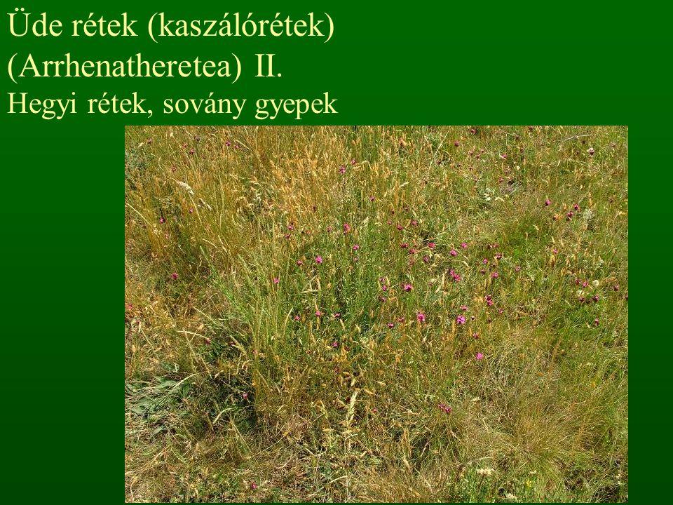 Száraz gyepek (szikla- és pusztagyepek) (Festuco-Brometea) I. Sziklagyepek