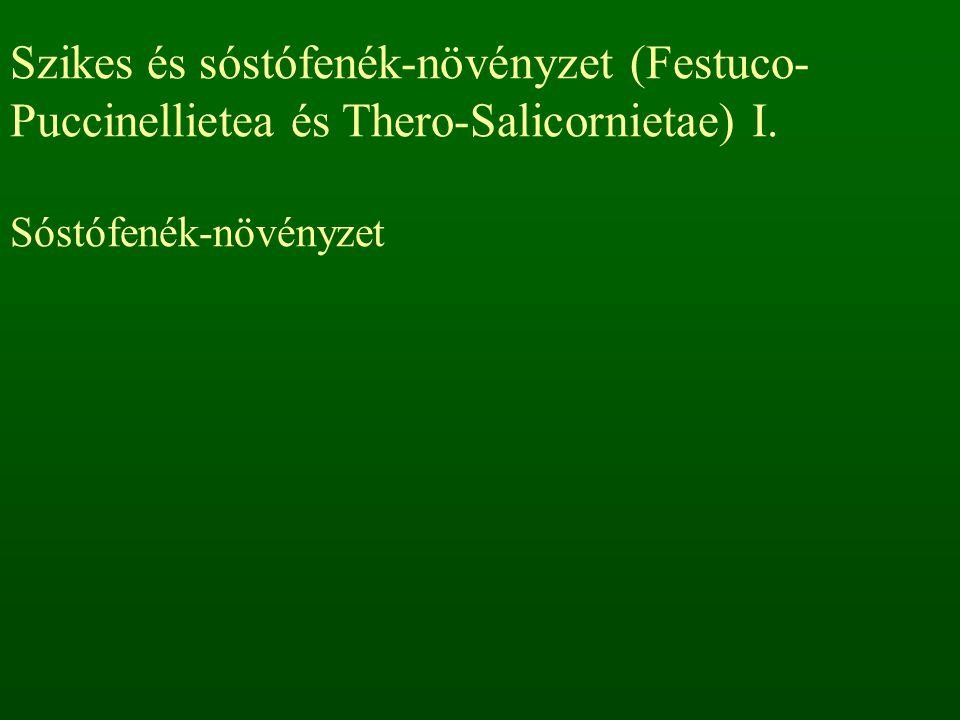 Szikes és sóstófenék-növényzet (Festuco- Puccinellietea és Thero-Salicornietae) I.