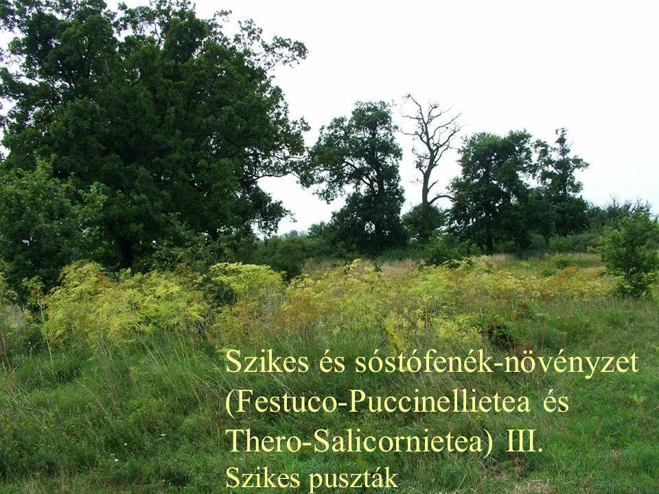 Szikes és sóstófenék-növényzet (Festuco-Puccinellietea és Thero-Salicornietea) III. Szikes puszták