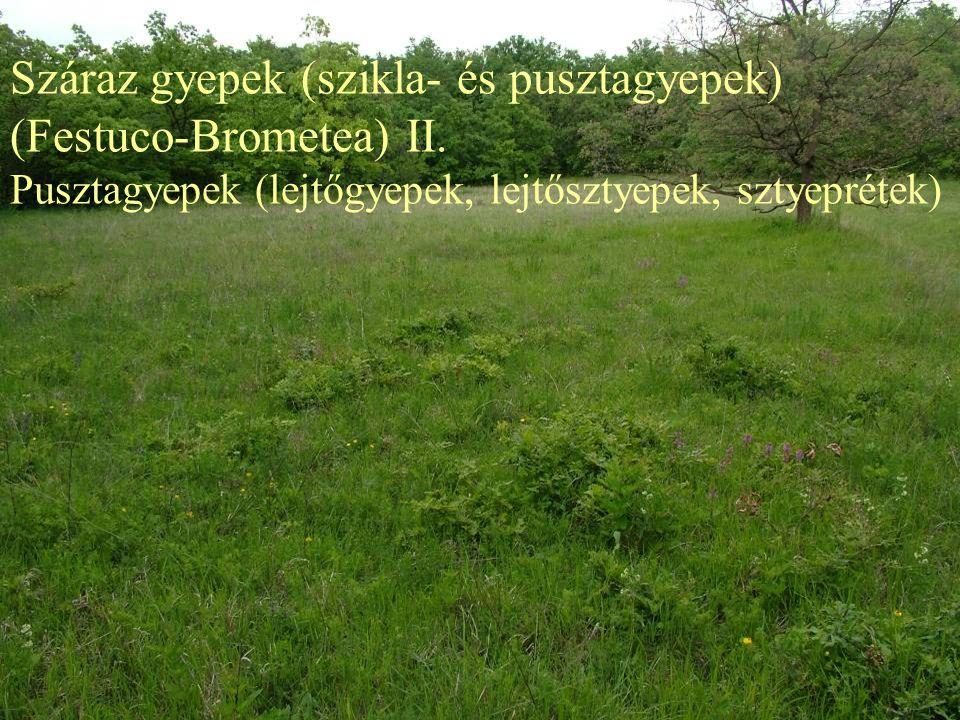 Száraz gyepek (szikla- és pusztagyepek) (Festuco-Brometea) II.