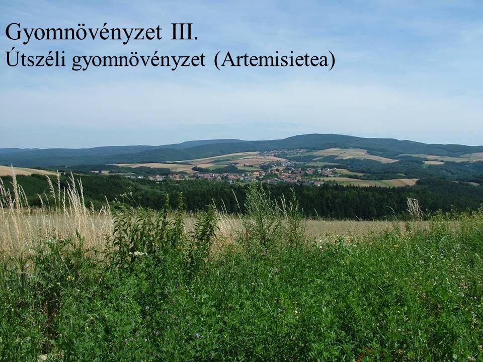 Gyomnövényzet III. Útszéli gyomnövényzet (Artemisietea)
