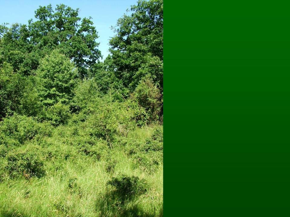 inváziós növények állományai