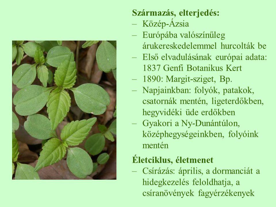 Származás, elterjedés: –Közép-Ázsia –Európába valószínűleg árukereskedelemmel hurcolták be –Első elvadulásának európai adata: 1837 Genfi Botanikus Ker