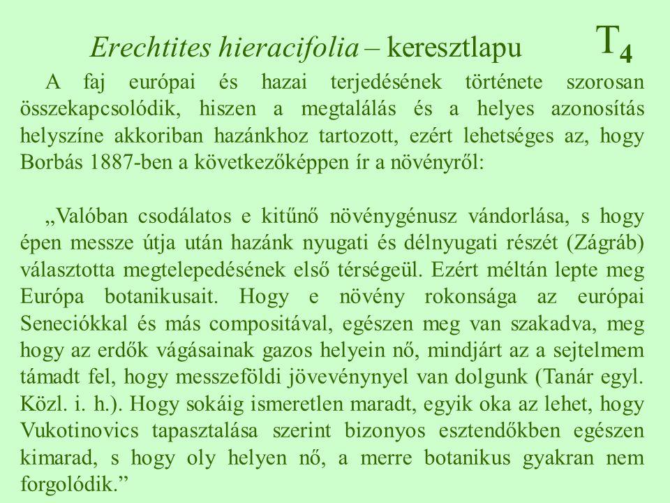 """T4T4 A faj európai és hazai terjedésének története szorosan összekapcsolódik, hiszen a megtalálás és a helyes azonosítás helyszíne akkoriban hazánkhoz tartozott, ezért lehetséges az, hogy Borbás 1887-ben a következőképpen ír a növényről: """"Valóban csodálatos e kitűnő növénygénusz vándorlása, s hogy épen messze útja után hazánk nyugati és délnyugati részét (Zágráb) választotta megtelepedésének első térségeül."""