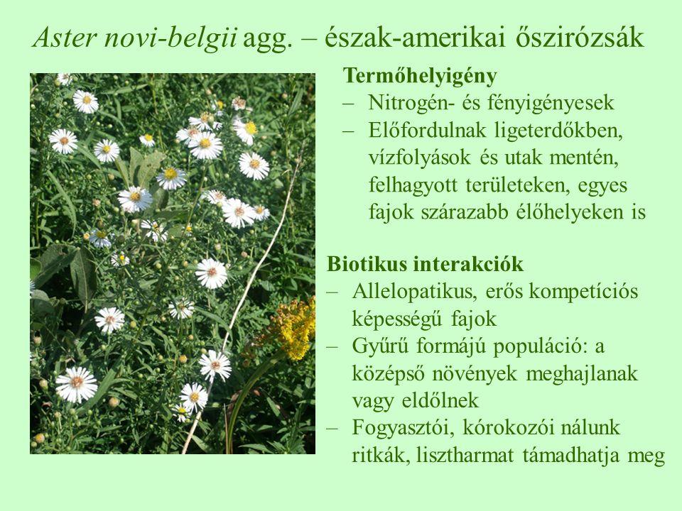 Aster novi-belgii agg. – észak-amerikai őszirózsák Termőhelyigény –Nitrogén- és fényigényesek –Előfordulnak ligeterdőkben, vízfolyások és utak mentén,