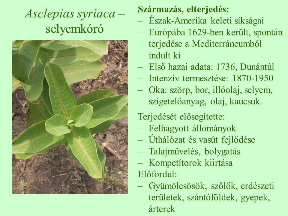 Asclepias syriaca – selyemkóró Származás, elterjedés: –Észak-Amerika keleti síkságai –Európába 1629-ben került, spontán terjedése a Mediterráneumból i