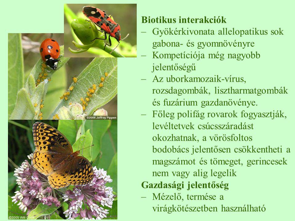 Biotikus interakciók –Gyökérkivonata allelopatikus sok gabona- és gyomnövényre –Kompetíciója még nagyobb jelentőségű –Az uborkamozaik-vírus, rozsdagom