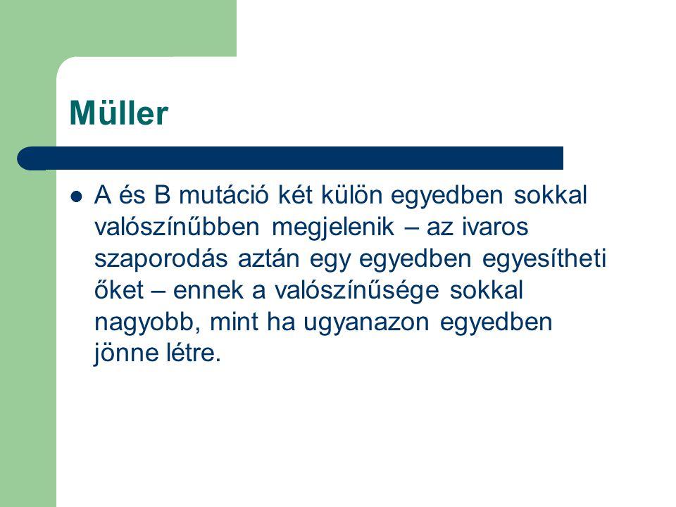Müller A és B mutáció két külön egyedben sokkal valószínűbben megjelenik – az ivaros szaporodás aztán egy egyedben egyesítheti őket – ennek a valószín