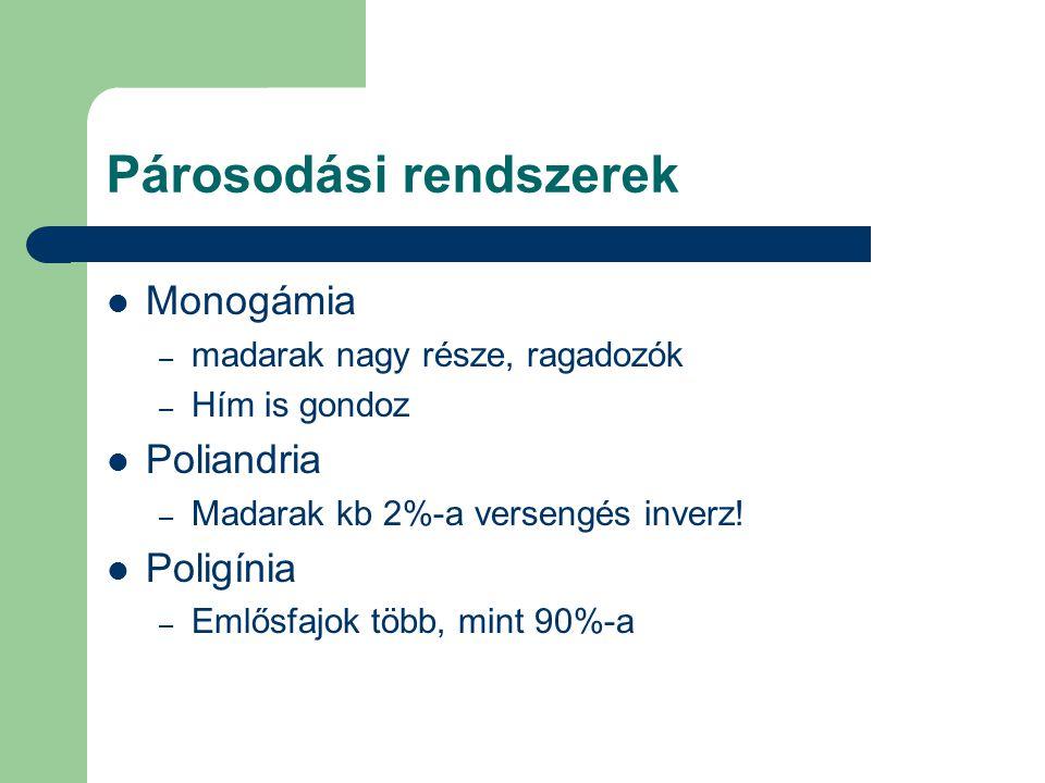 Párosodási rendszerek Monogámia – madarak nagy része, ragadozók – Hím is gondoz Poliandria – Madarak kb 2%-a versengés inverz! Poligínia – Emlősfajok
