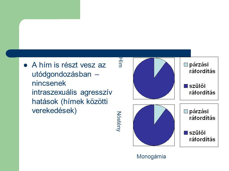 A hím is részt vesz az utódgondozásban – nincsenek intraszexuális agresszív hatások (hímek közötti verekedések) Hím Nőstény Monogámia