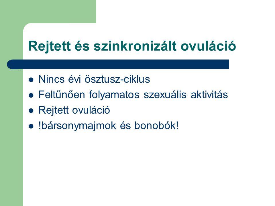 Rejtett és szinkronizált ovuláció Nincs évi ösztusz-ciklus Feltűnően folyamatos szexuális aktivitás Rejtett ovuláció !bársonymajmok és bonobók!