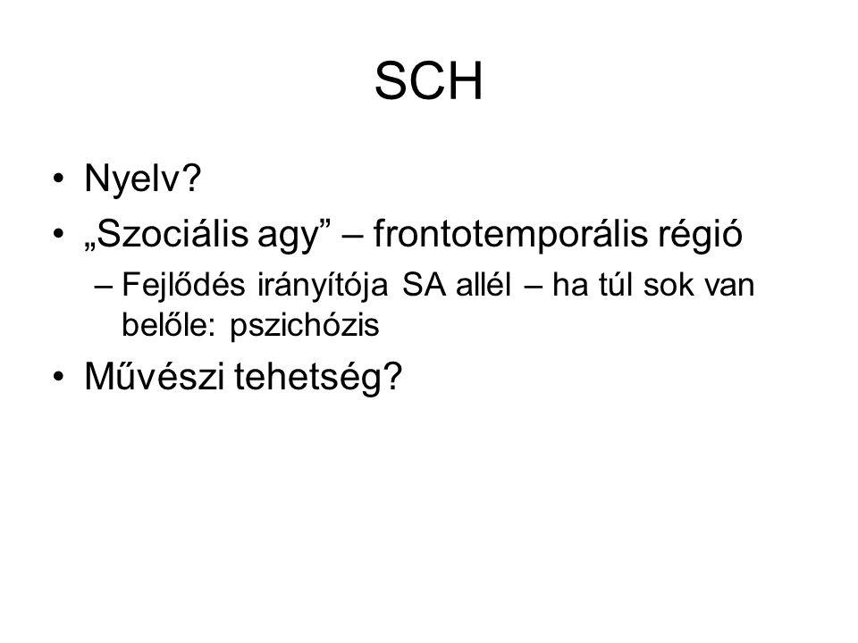 SCH Nyelv.