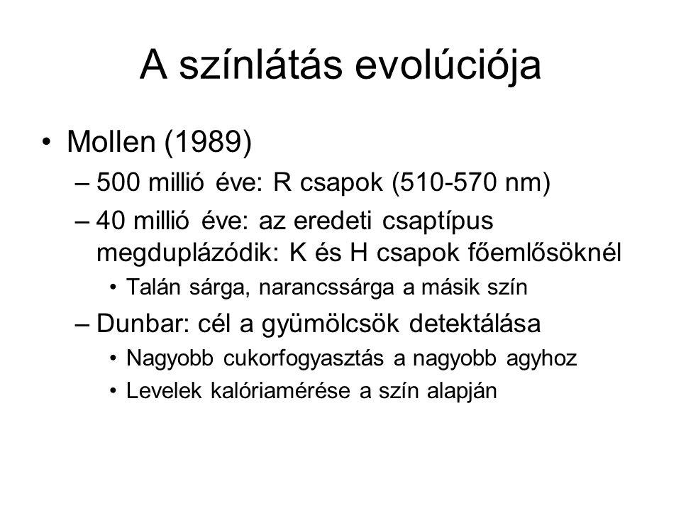A színlátás evolúciója Mollen (1989) –500 millió éve: R csapok (510-570 nm) –40 millió éve: az eredeti csaptípus megduplázódik: K és H csapok főemlősöknél Talán sárga, narancssárga a másik szín –Dunbar: cél a gyümölcsök detektálása Nagyobb cukorfogyasztás a nagyobb agyhoz Levelek kalóriamérése a szín alapján