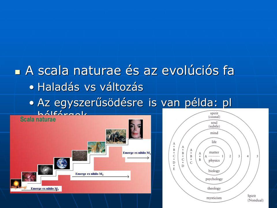 A scala naturae és az evolúciós fa A scala naturae és az evolúciós fa Haladás vs változásHaladás vs változás Az egyszerűsödésre is van példa: pl bélférgekAz egyszerűsödésre is van példa: pl bélférgek