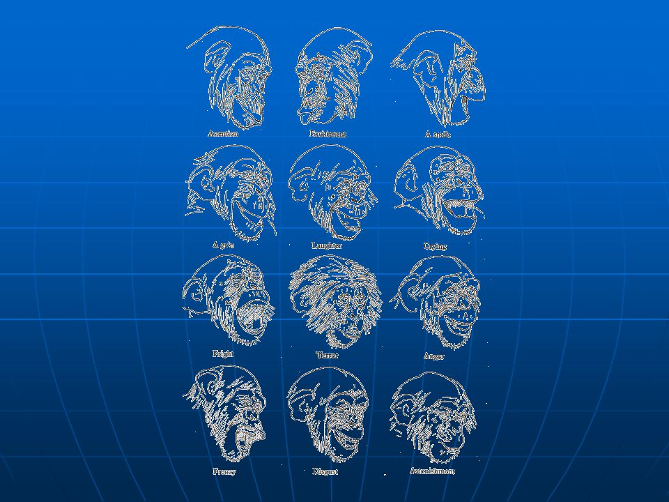 A csupasz majom története Rágcsáló-> majom -> emberszabású Rágcsáló-> majom -> emberszabású Emberszabásúak eltérő fejlődése csak az Óvilágban Emberszabásúak eltérő fejlődése csak az Óvilágban Kedvezőtlen éghajlat : Kimerészkedtek a szavannára – verseny (kutya, macskafélék) Kedvezőtlen éghajlat : Kimerészkedtek a szavannára – verseny (kutya, macskafélék) Utolsó egymillió év: sok változás – felegyenesedés, agyméret, kezek használata Utolsó egymillió év: sok változás – felegyenesedés, agyméret, kezek használata