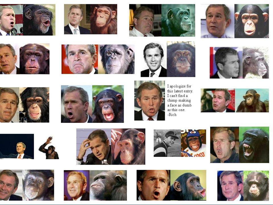 A csupasz majom története Vadászat, szerszámkészítés, letelepedés Vadászat, szerszámkészítés, letelepedés Alapvető változás: növényevőkből lettünk húsevők (az óriáspanda fordítva) Alapvető változás: növényevőkből lettünk húsevők (az óriáspanda fordítva) Kire hasonlítunk jobban.