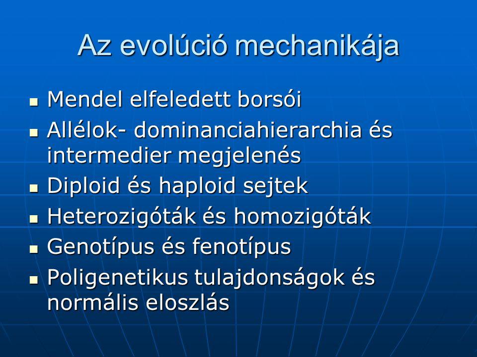 Az evolúció mechanikája Mendel elfeledett borsói Mendel elfeledett borsói Allélok- dominanciahierarchia és intermedier megjelenés Allélok- dominanciahierarchia és intermedier megjelenés Diploid és haploid sejtek Diploid és haploid sejtek Heterozigóták és homozigóták Heterozigóták és homozigóták Genotípus és fenotípus Genotípus és fenotípus Poligenetikus tulajdonságok és normális eloszlás Poligenetikus tulajdonságok és normális eloszlás