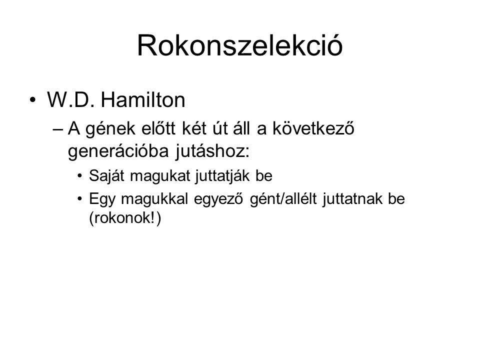 Rokonszelekció W.D. Hamilton –A gének előtt két út áll a következő generációba jutáshoz: Saját magukat juttatják be Egy magukkal egyező gént/allélt ju
