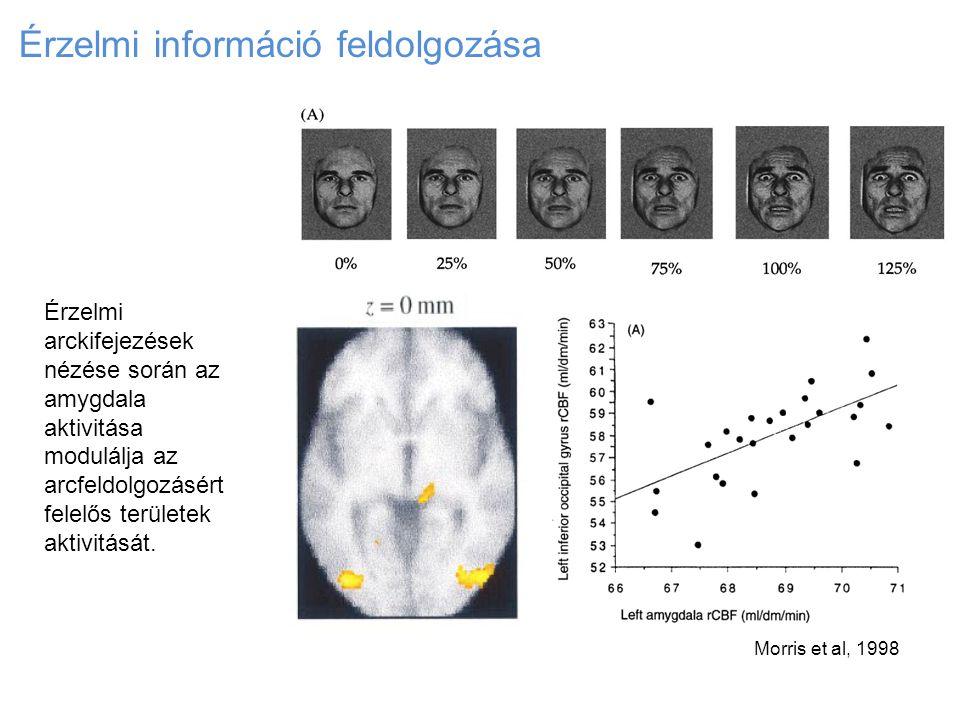 Érzelmi információ feldolgozása Morris et al, 1998 Érzelmi arckifejezések nézése során az amygdala aktivitása modulálja az arcfeldolgozásért felelős t