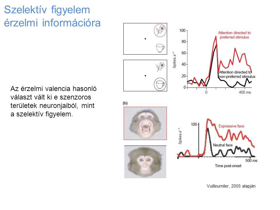 Vuilleumiler, 2005 alapján Szelektív figyelem érzelmi információra Az érzelmi valencia hasonló választ vált ki e szenzoros területek neuronjaiból, min