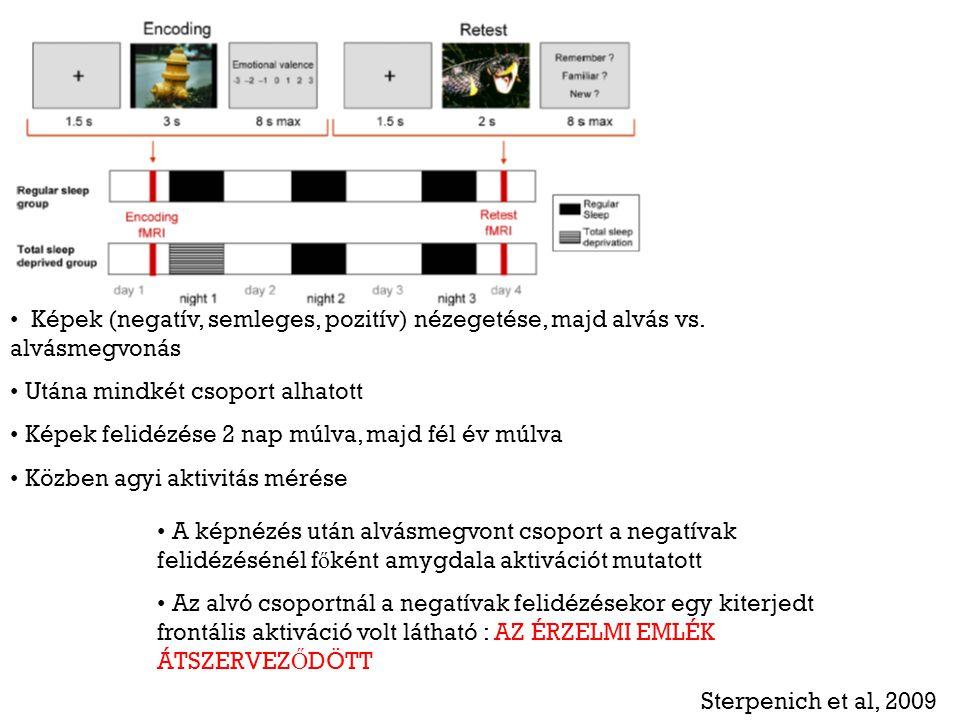 Sterpenich et al, 2009 Képek (negatív, semleges, pozitív) nézegetése, majd alvás vs. alvásmegvonás Utána mindkét csoport alhatott Képek felidézése 2 n